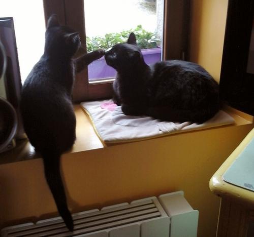 Basile et Titou 928