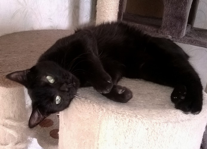 Lilo 429e membre du Club chats Noirs