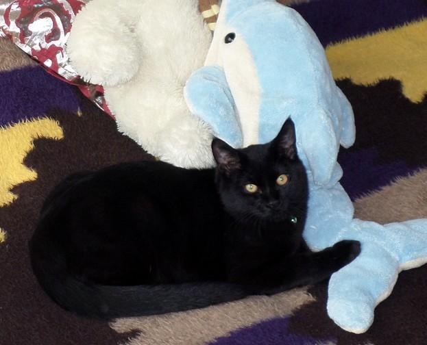 Loki, 508e membre du Club Chats Noirs