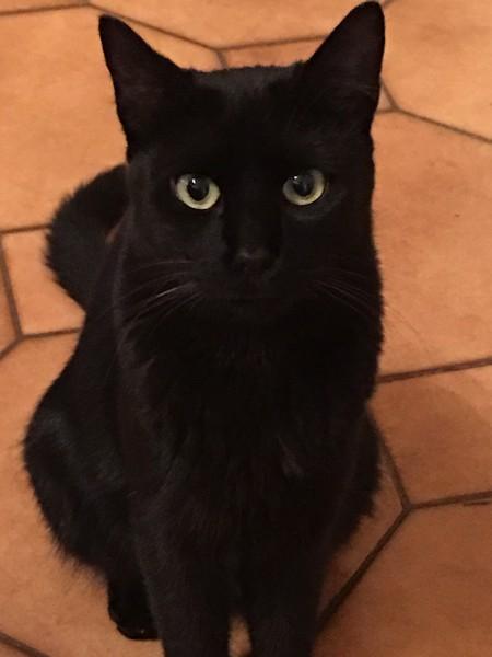 Louna chat noir 1201