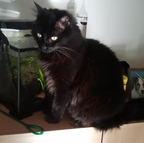 Loustique 638e membre club chats noirs