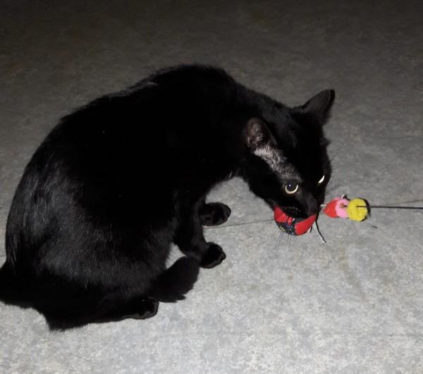 Luigi chat noir 1301