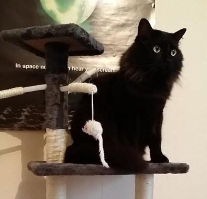 Lyo 654 chats noirs