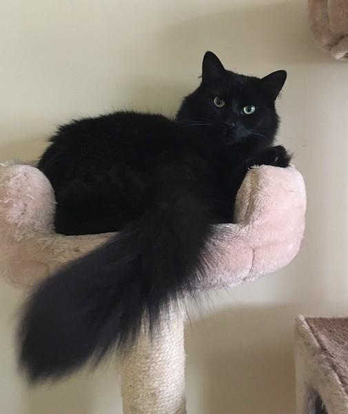 M.Big chat noir 1300