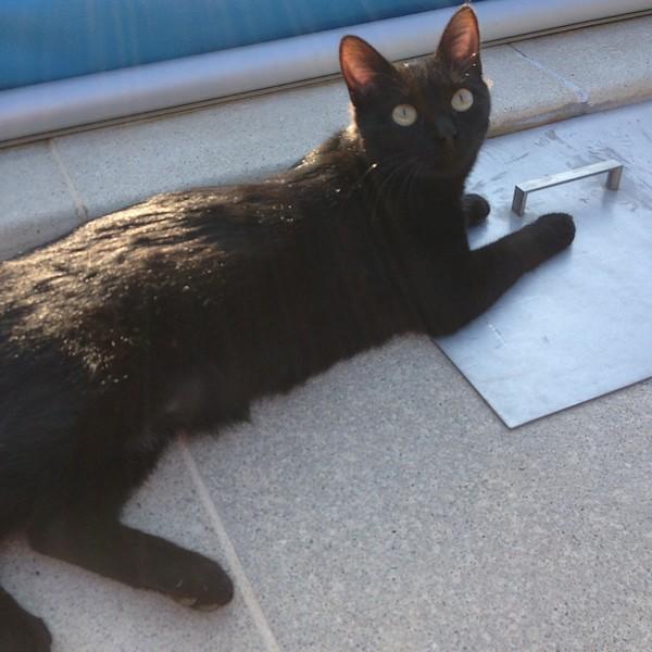 Maki 600 - Chats noirs