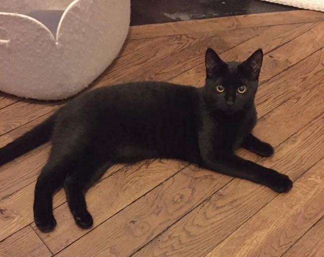 Manon chat noir 1220
