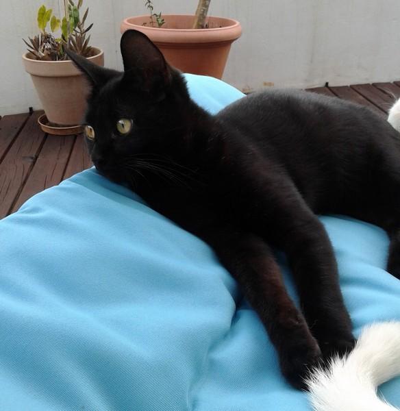 Mario chat noir 1297