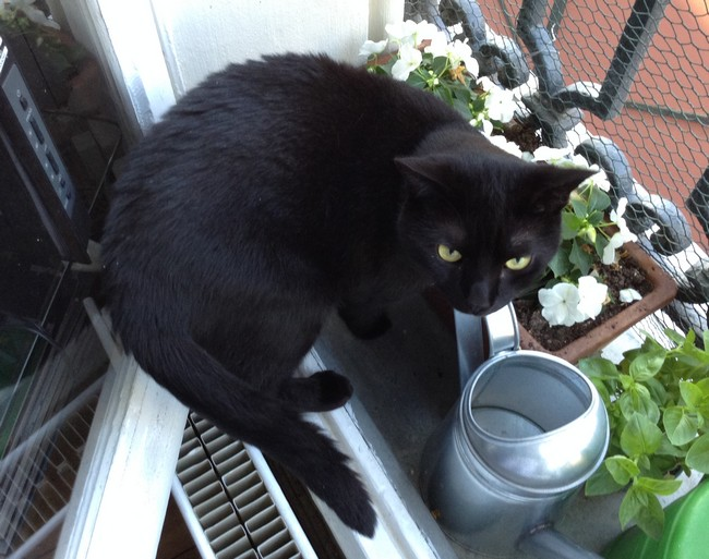 Marlon 540e membre club chats noirs