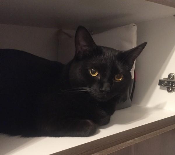 Martie chat noir 1246