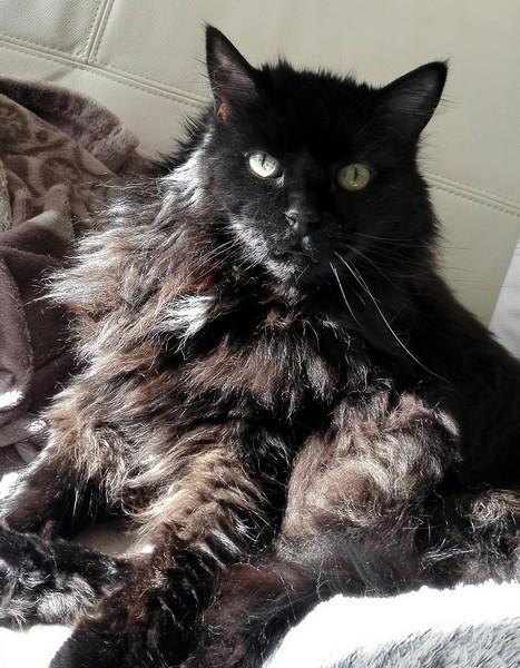 Maxou chat noir 1216
