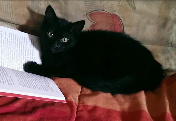 Maya, 362e membre du club chats noirs
