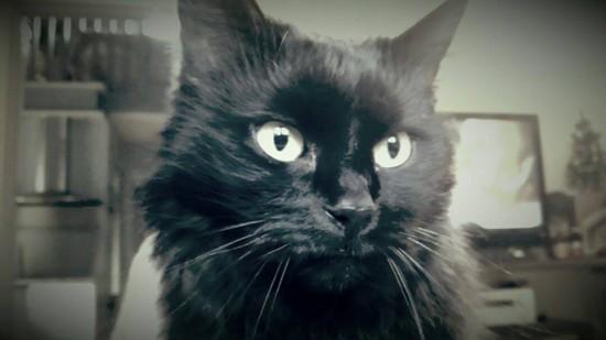 Maya - 577 - chats noirs