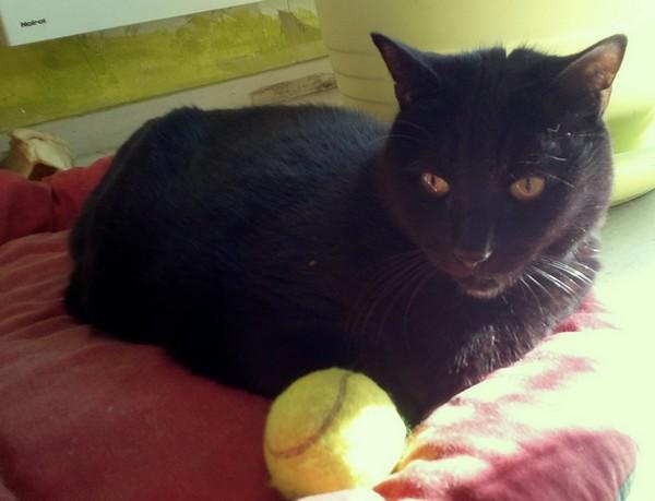 Merlin chat noir 1209