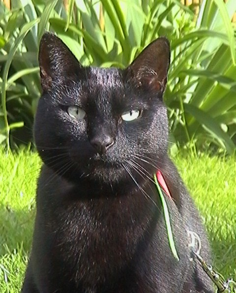 Merlin, 397e membres du Club Chats Noirs