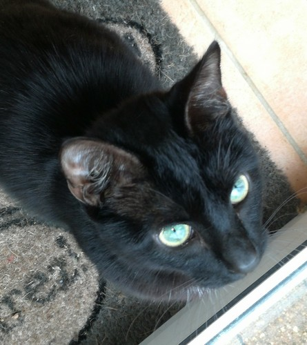 Midnight chat noir 1228