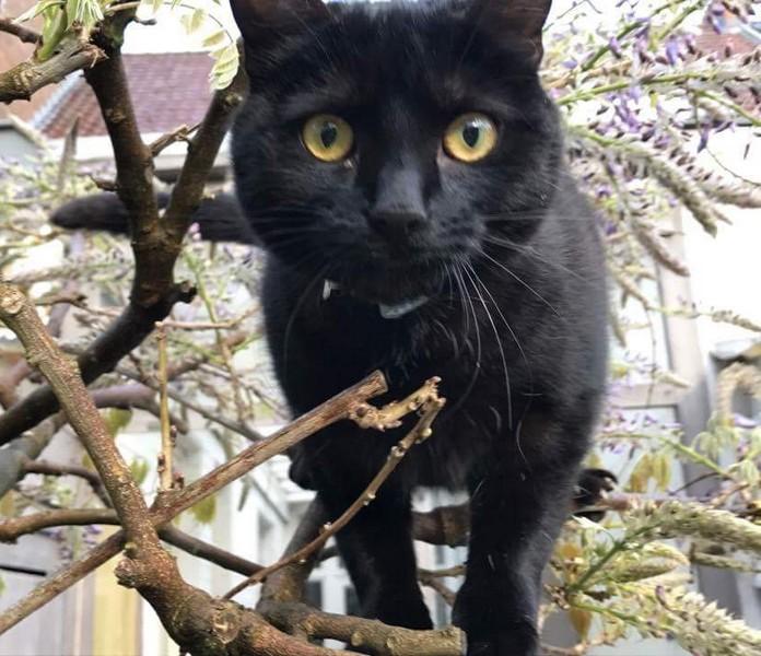 Mila chat noir 1239