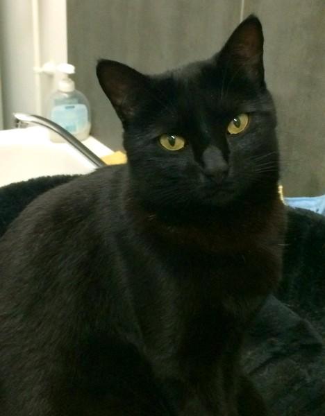 Milka chat noir 1206