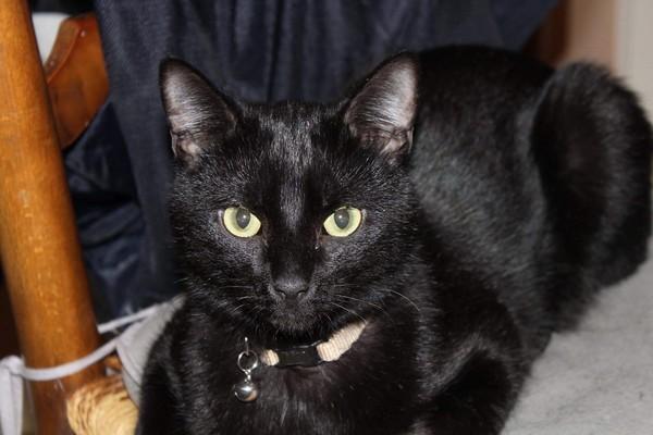Milka chat noir 1283