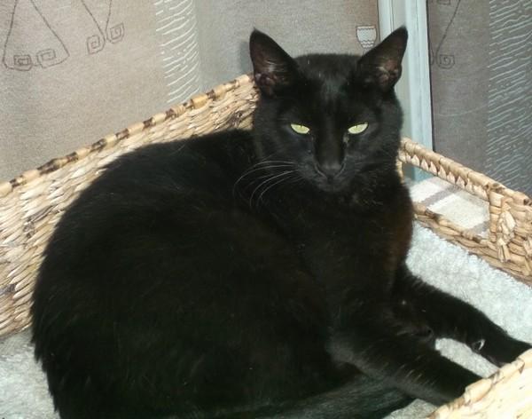 Milo chat noir 1298