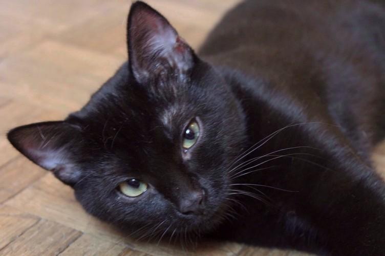 Minna chat noir 1282