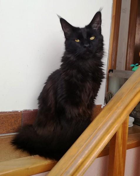 Minuit chat noir 1278