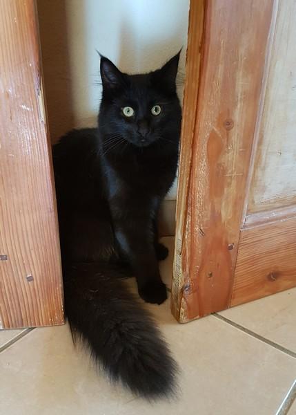 Missia chat noir 1250