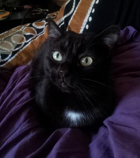 Mola - chats noirs