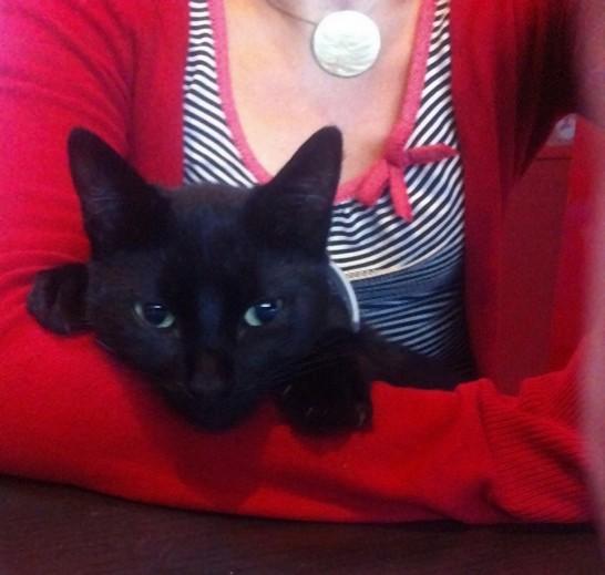 Mouche, 367e membre du club chats noirs