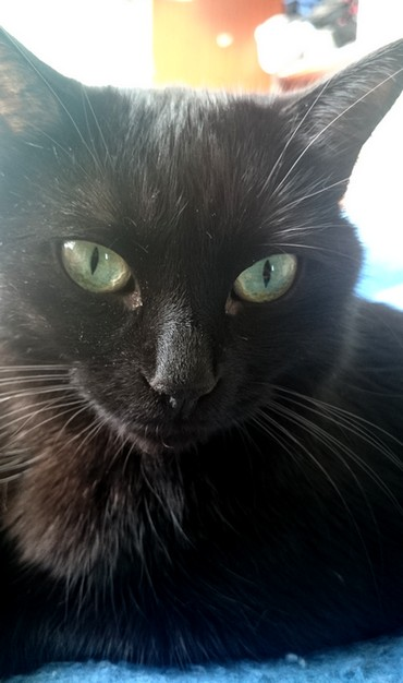 Mystic 538e membre club chats noirs