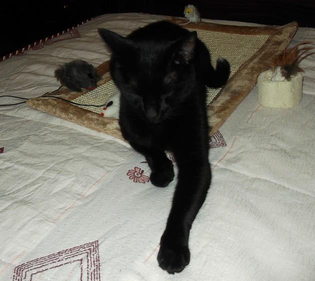 Nadir 493ème membre du Club Chats Noirs