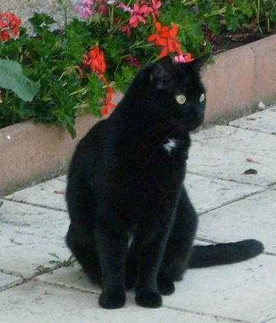 Nala 448e membre du club chats noirs