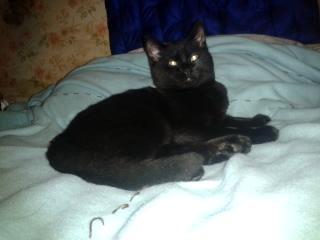 Ne-Yo, 363e membre du club chats noirs