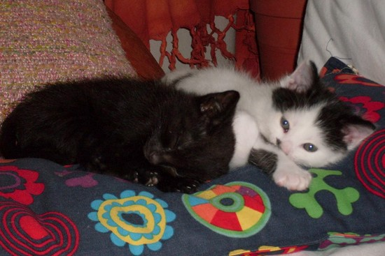 Neko 549e membre club chats noirs