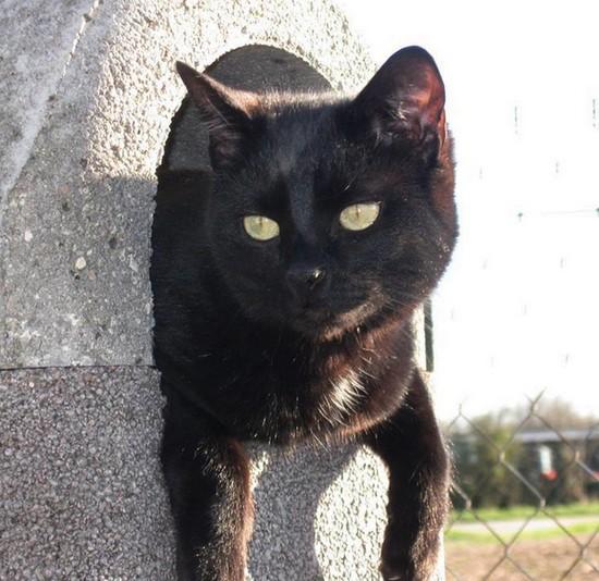 Neko 549e membre du club chats noirs