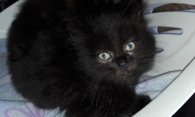 Nemty chat noir 1264