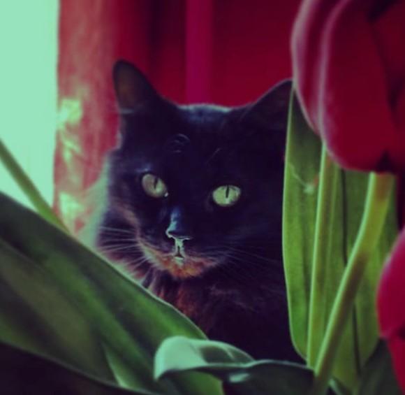 Nénette chat noir 1202
