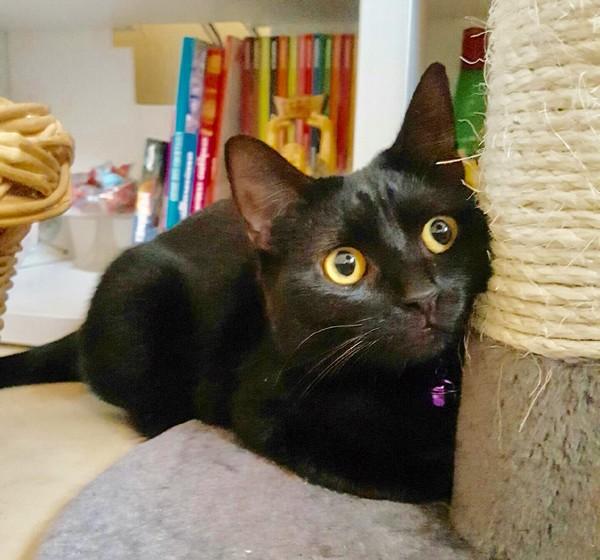 Nénette chat noir 1269