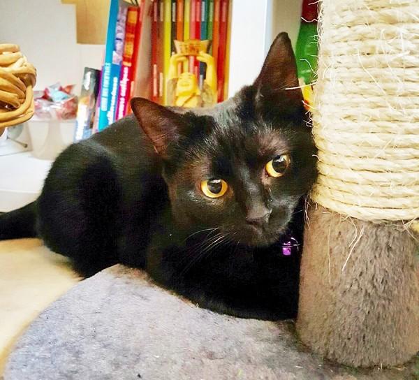 Nénette chat noir 1290
