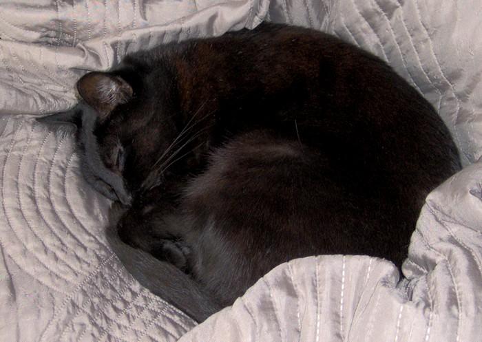 Nénette, 389e membre du Club Chats Noirs