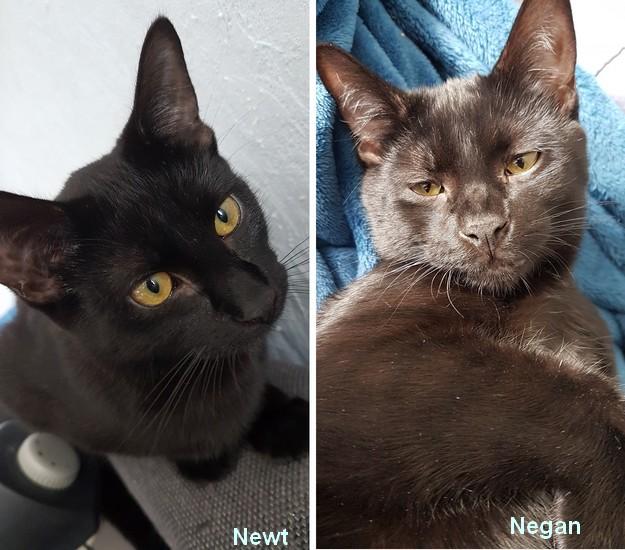 Newt et Negan 1338