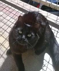 Ninette chat noir 1219