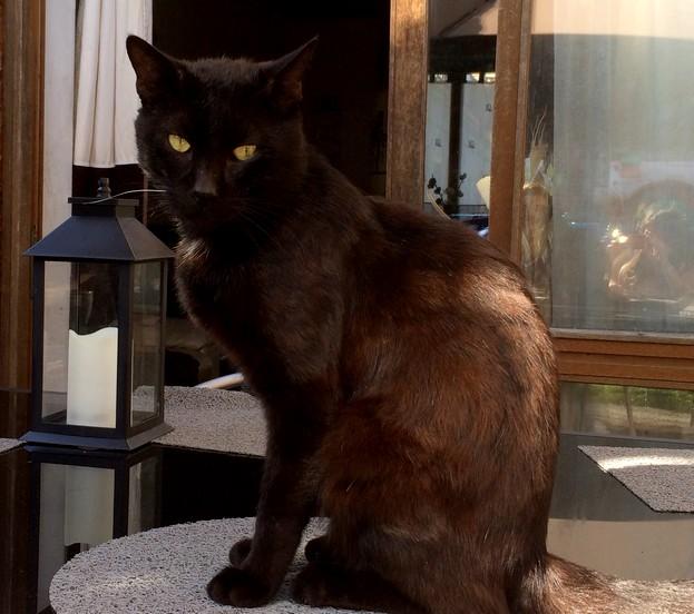 Noirou 643e chat noir