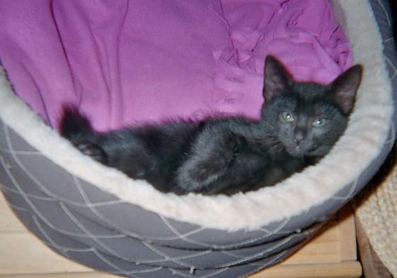 Nounours 635e membre club chats noirs