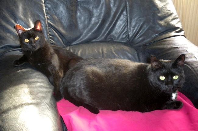 Oriane et Kyttie, 365eme membre du club chats noirs