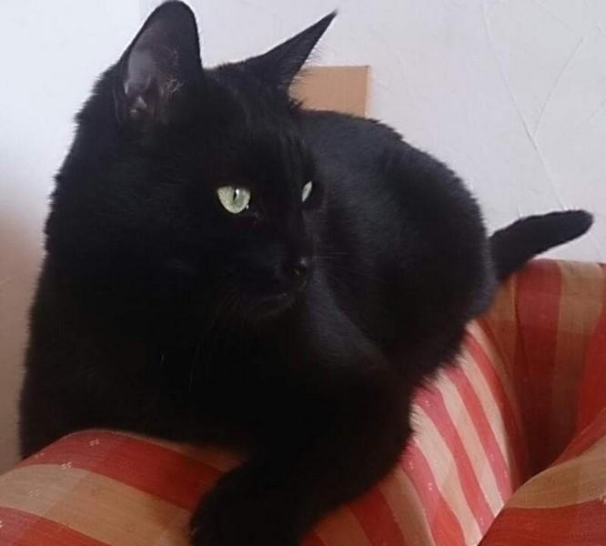 Orion chat noir 1242