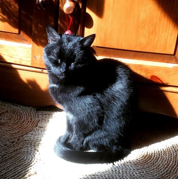Orphée 649e chat noir