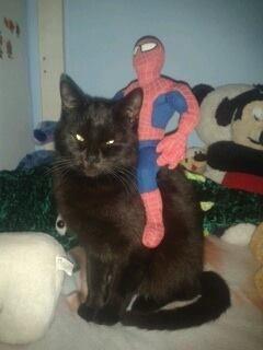 Perle 584e chat noir -Club Chats Noirs