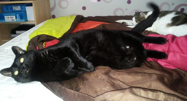 Pilou 535e membre club chats noirs