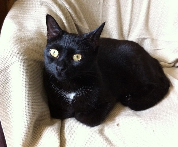Pita, 363e membre du club chats noirs