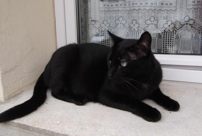 Quasar 537e membre club chats noirs